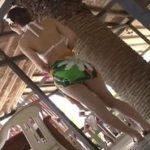 ビアガーデンのビキニ美脚娘が仕事中にチカンされる動画